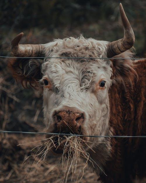 Free stock photo of agriculture, alaska, animal