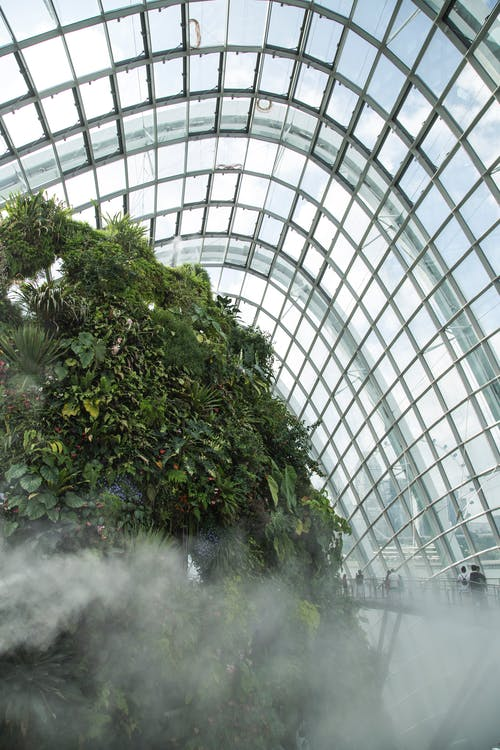 Tropical plants growing in botanic park under glass ceiling