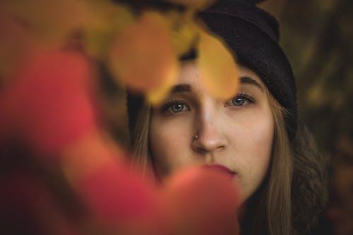 Photos gratuites de apparence, arbre, automne