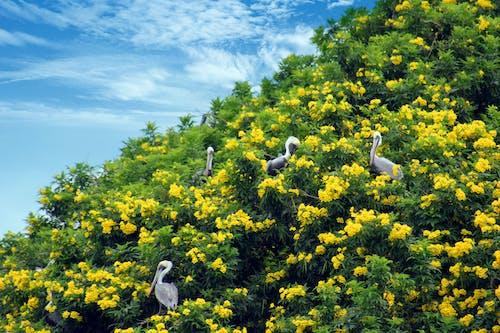 deniz kuşu, doğa, kosta rika, pelikanlar içeren Ücretsiz stok fotoğraf