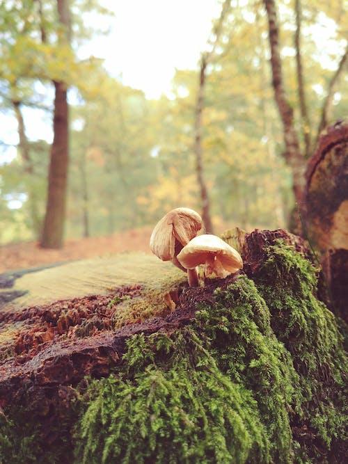 Foto stok gratis bagus, berbayang, flora, hutan