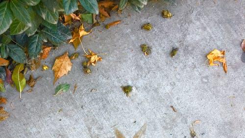 Free stock photo of floor, leafs