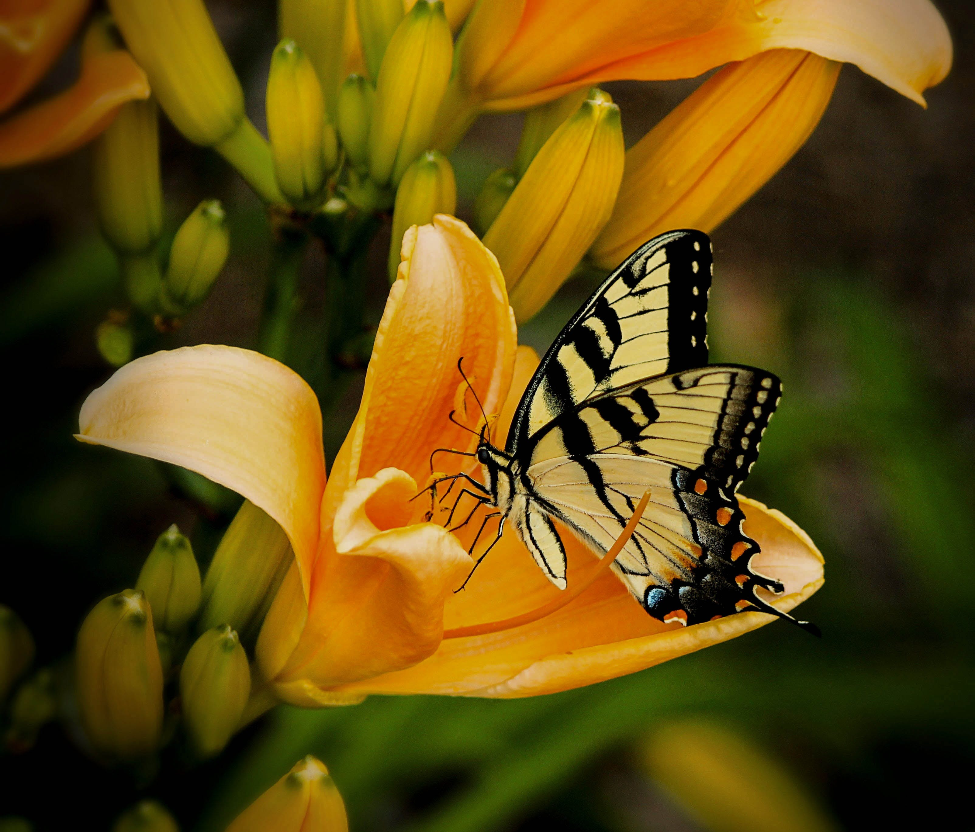 Black and White Butterfly Perch on Yellow Petaled Flower