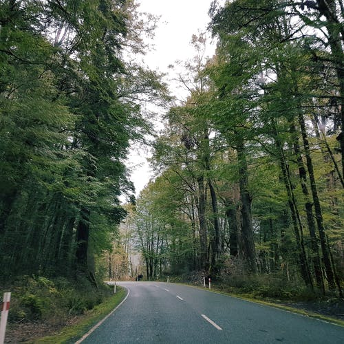 Free stock photo of drive, forest, green, road