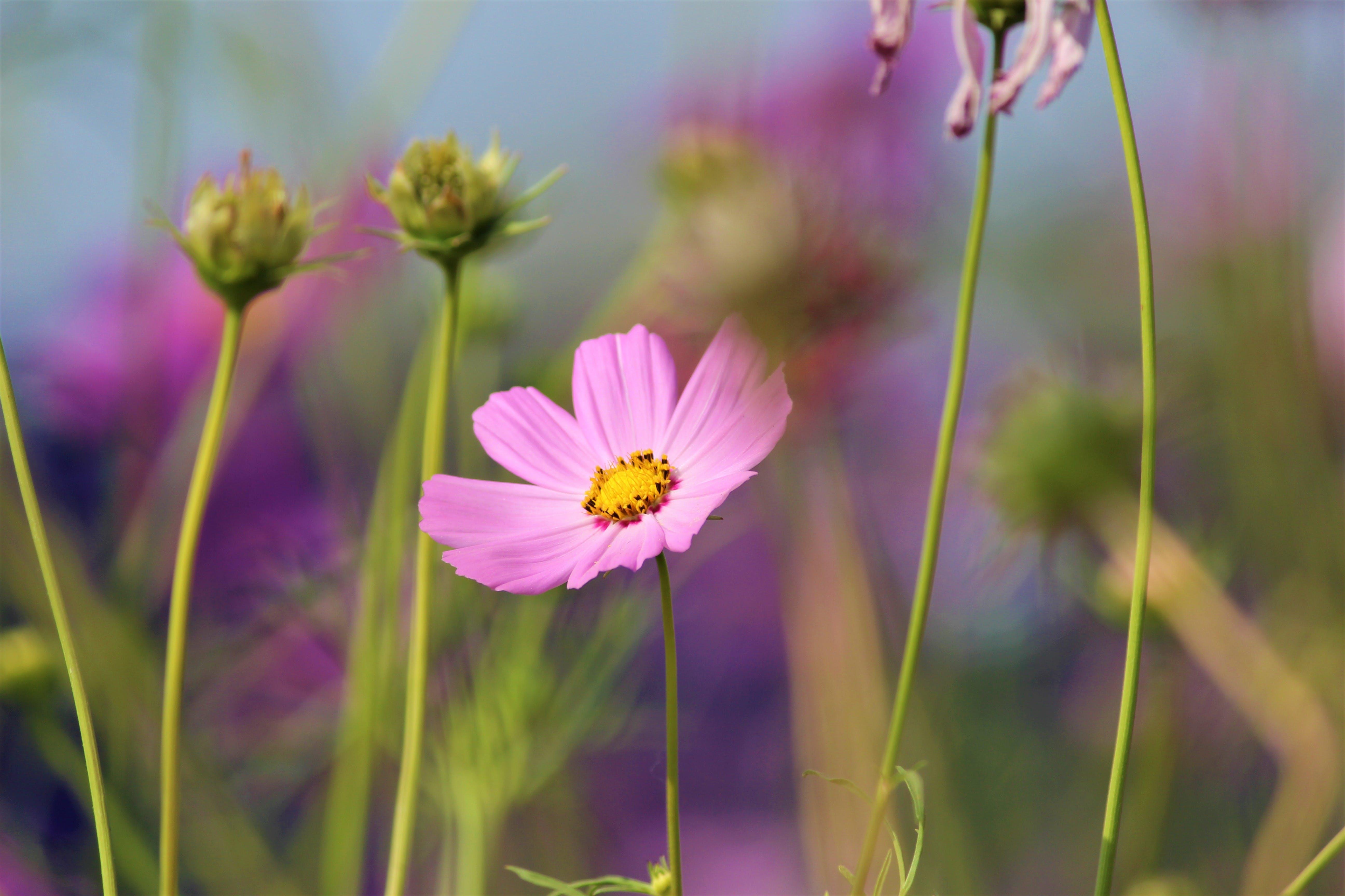 Photos gratuites de bourgeons de fleurs, brillant, brouiller, clairière
