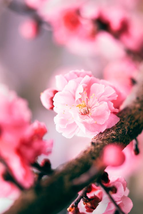 Closeup of thin twig of tree with delicate flower with pink petals growing in garden in summer