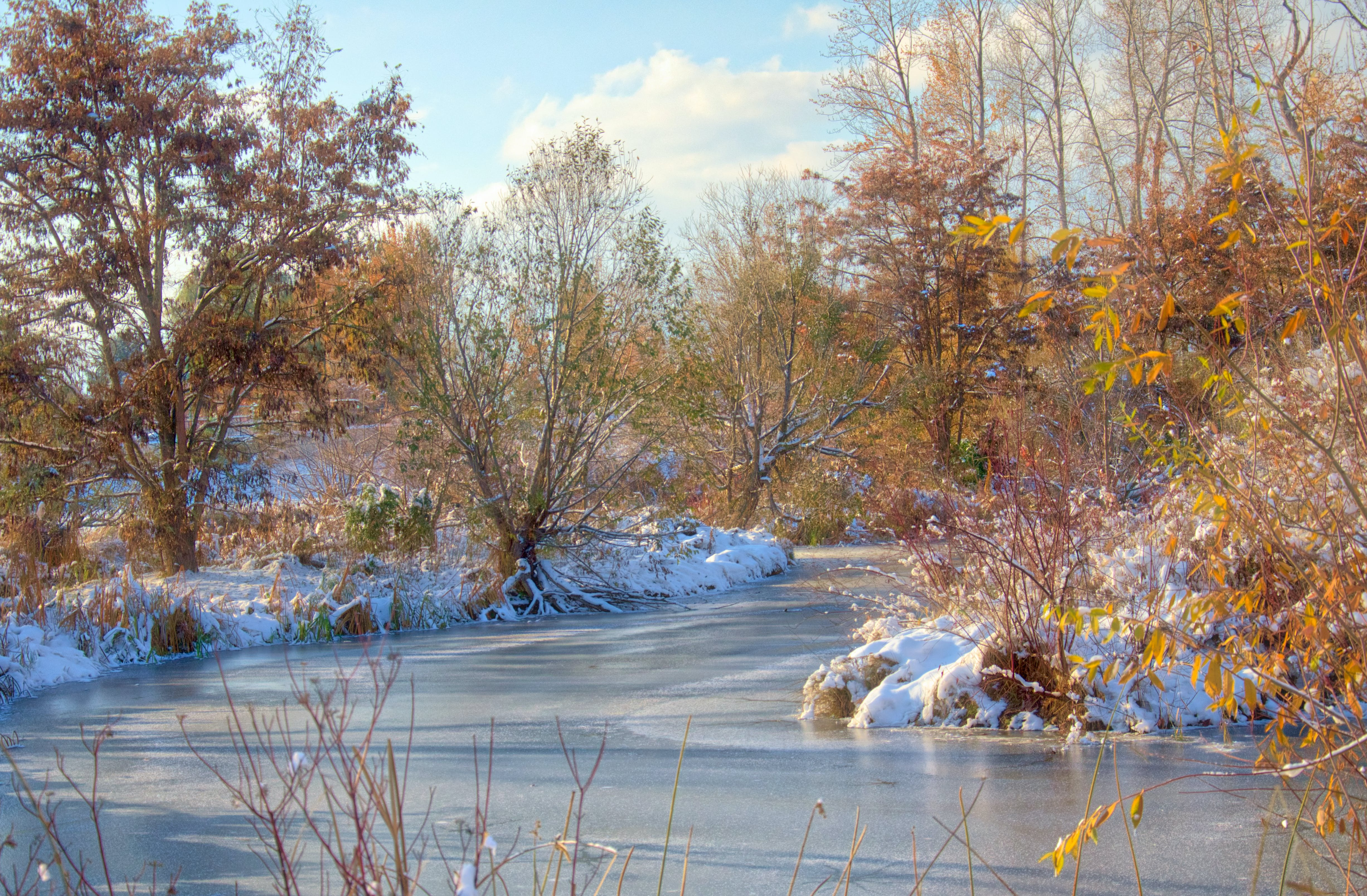 Free stock photo of winter fall water trees ice snow creek river