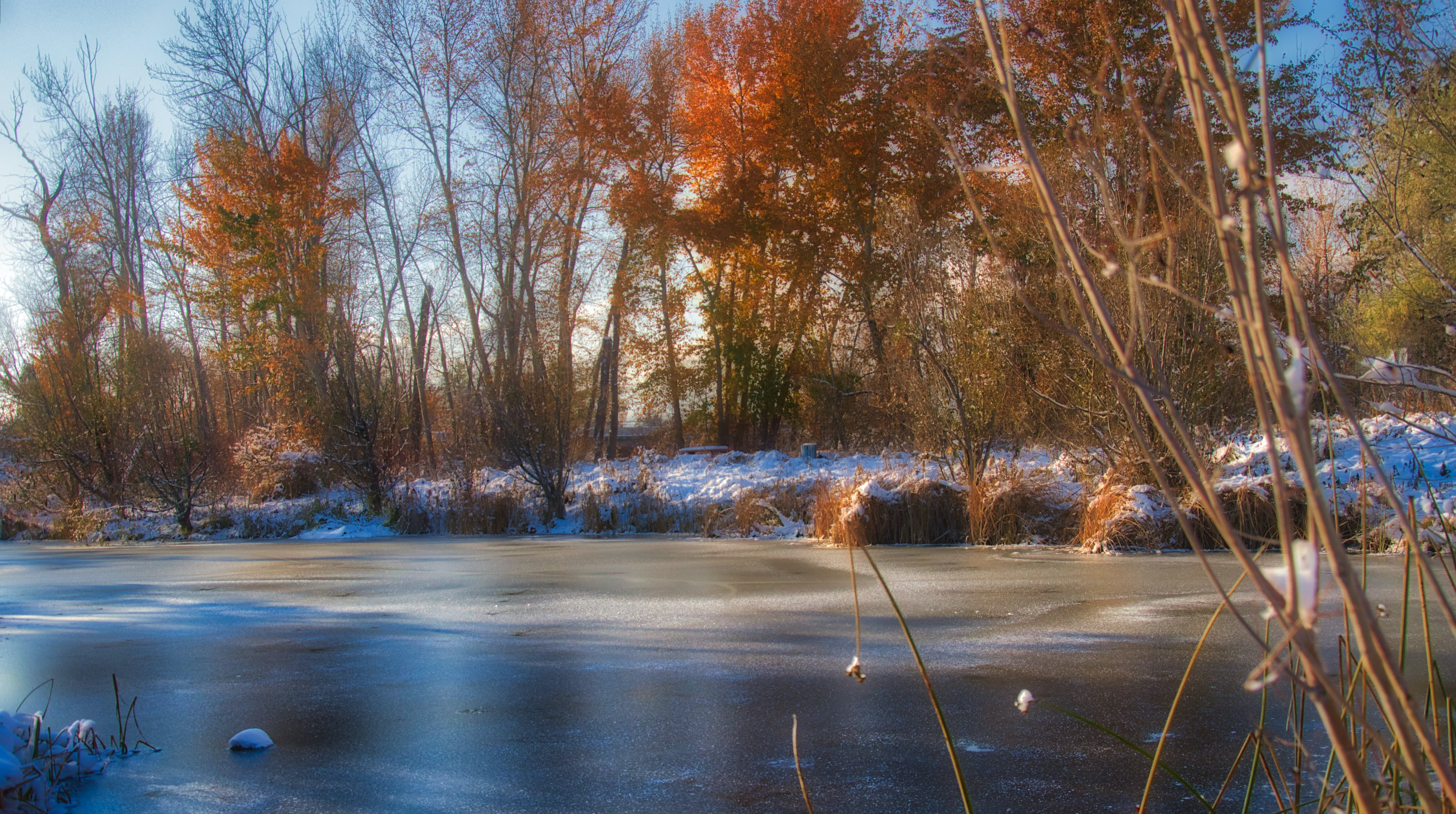 Free stock photo of snow river creek ice water colour trees