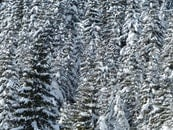 snow, nature, trees