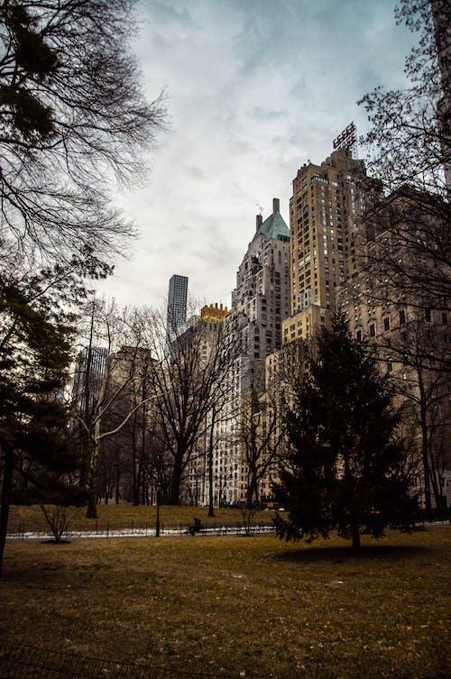 คลังภาพถ่ายฟรี ของ skyscapers, การจัดสวน, นิวยอร์ก