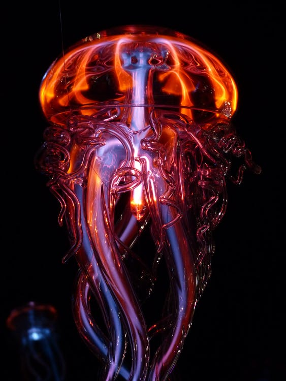 Red Jelly Fish