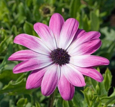 Purple and White Petal Flower