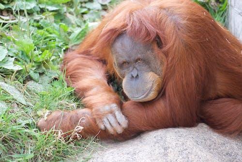 Foto profissional grátis de animais selvagens, animal, bicho