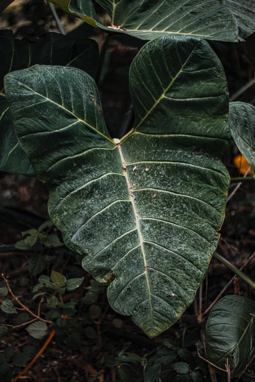 From above of tropical plant with veins on large leaves growing on terrain in daytime