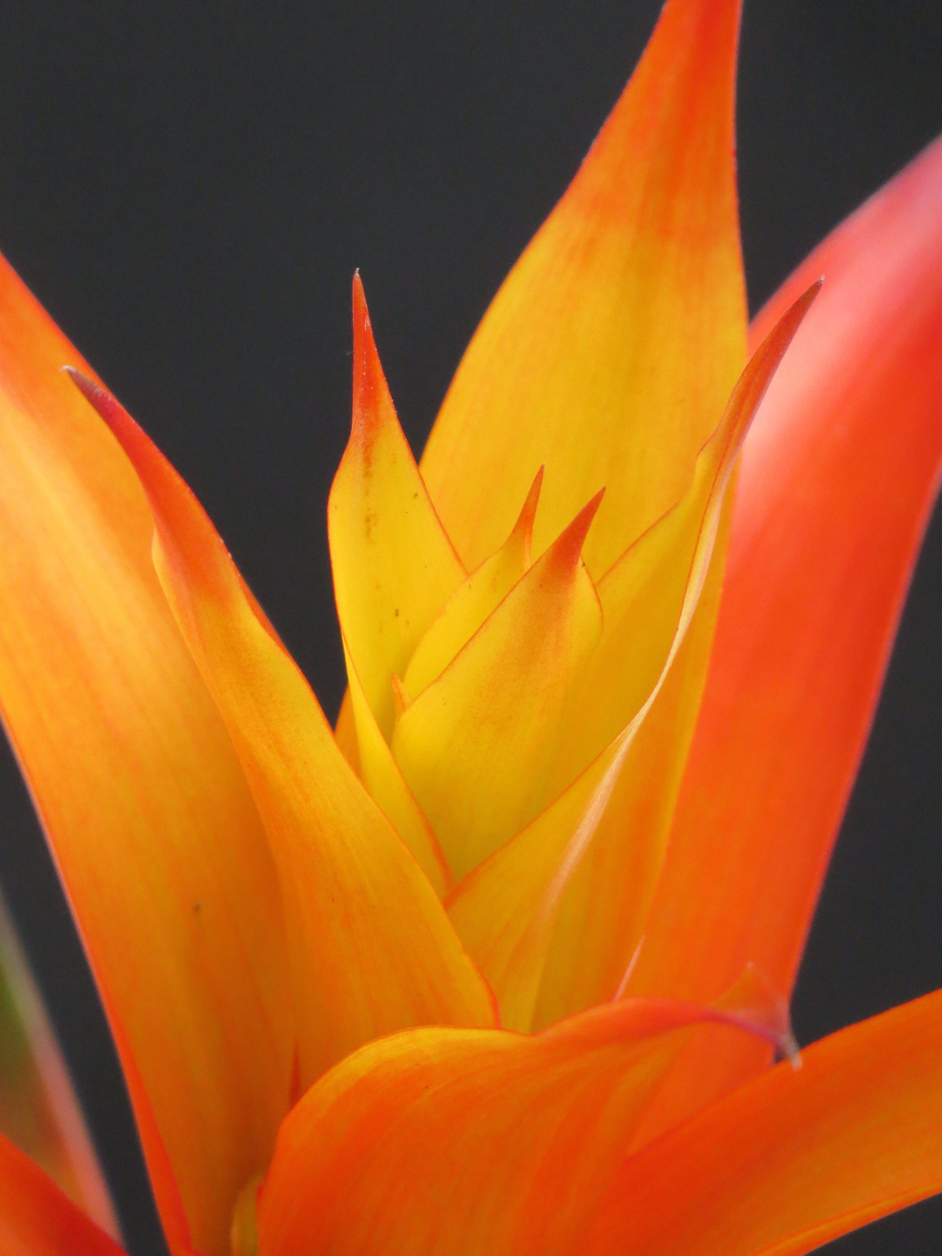 Orange and Yellow Petal Flower