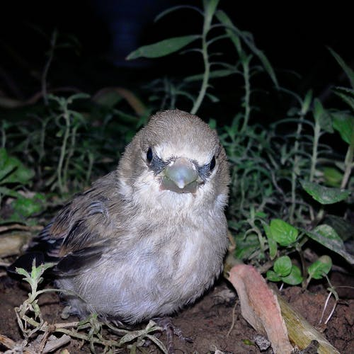 Free stock photo of animal, sparrow