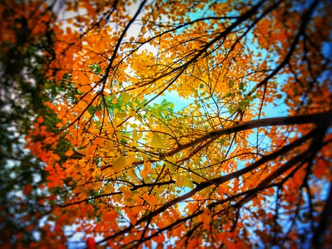 Low Angle Photo of Trees With Orange Leaves