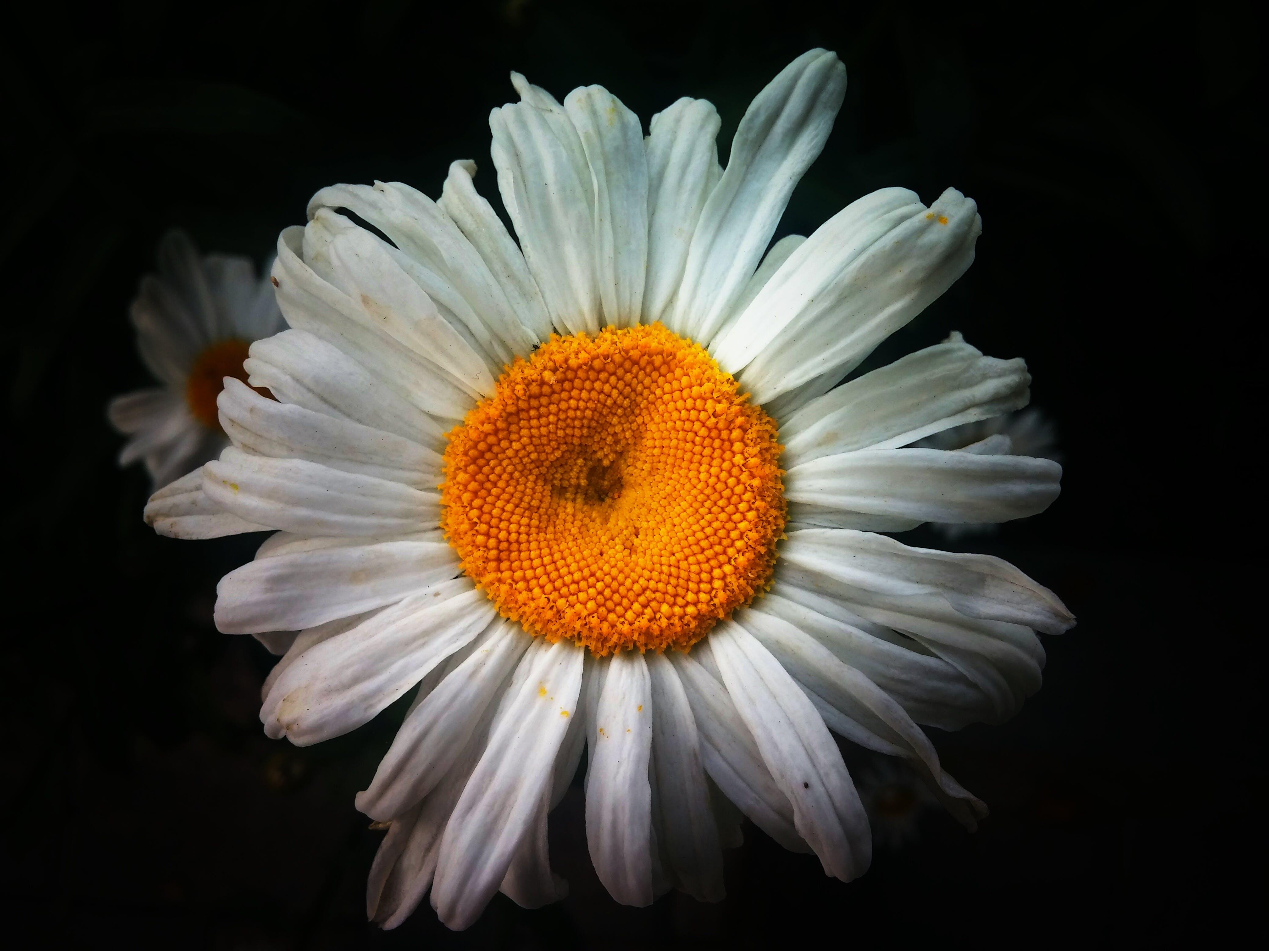 Foto d'estoc gratuïta de flor