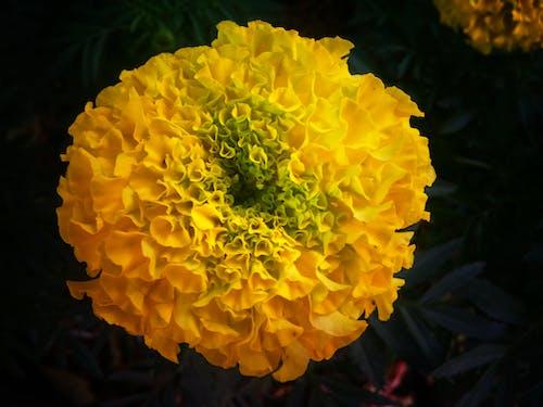 Fotobanka sbezplatnými fotkami na tému kvet