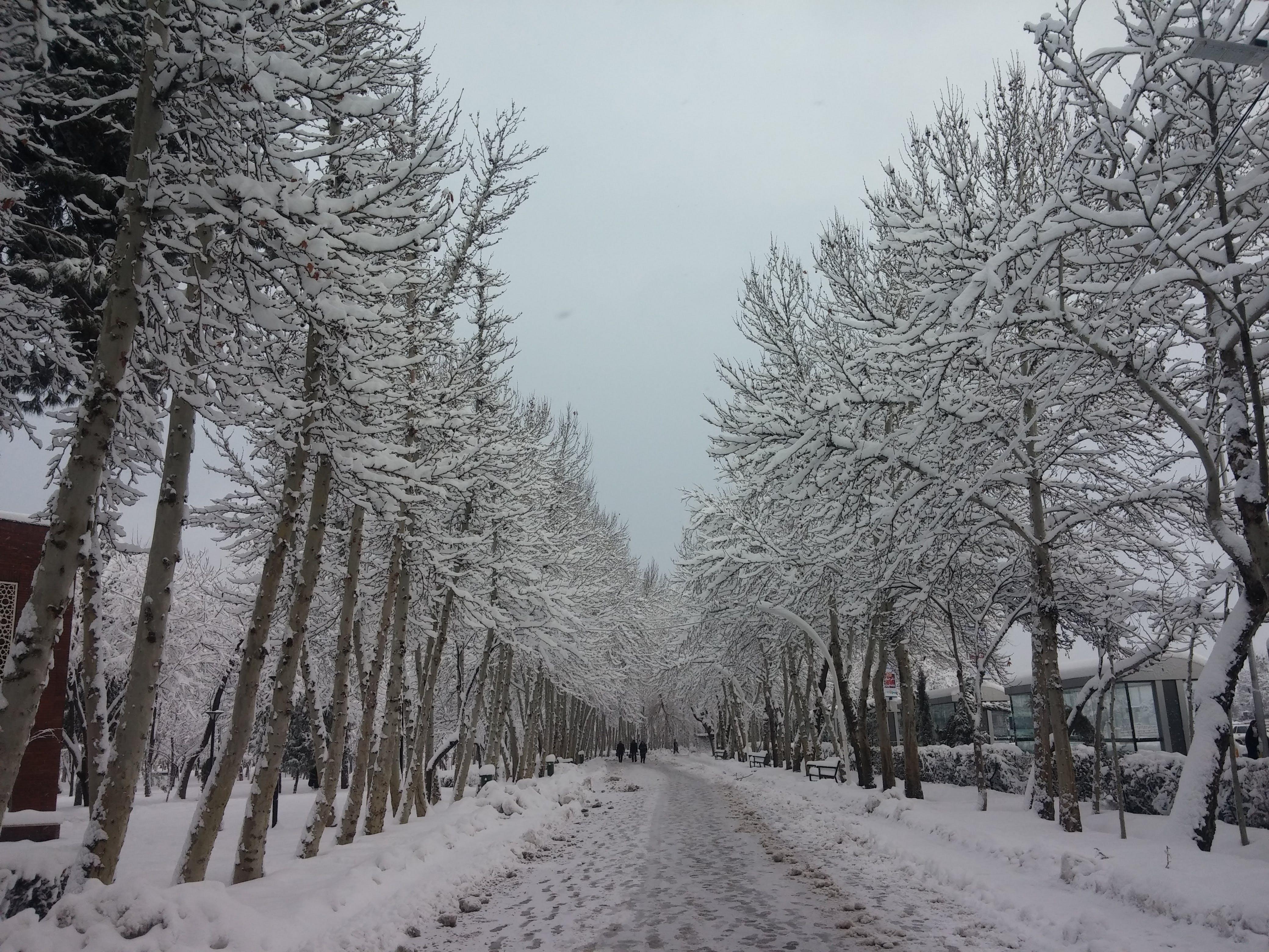 Foto d'estoc gratuïta de arbre, hivern