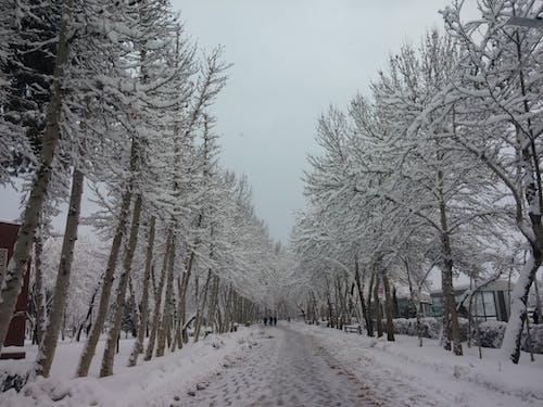 겨울의 무료 스톡 사진