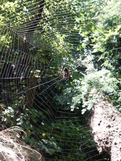 Fotobanka sbezplatnými fotkami na tému pavúk