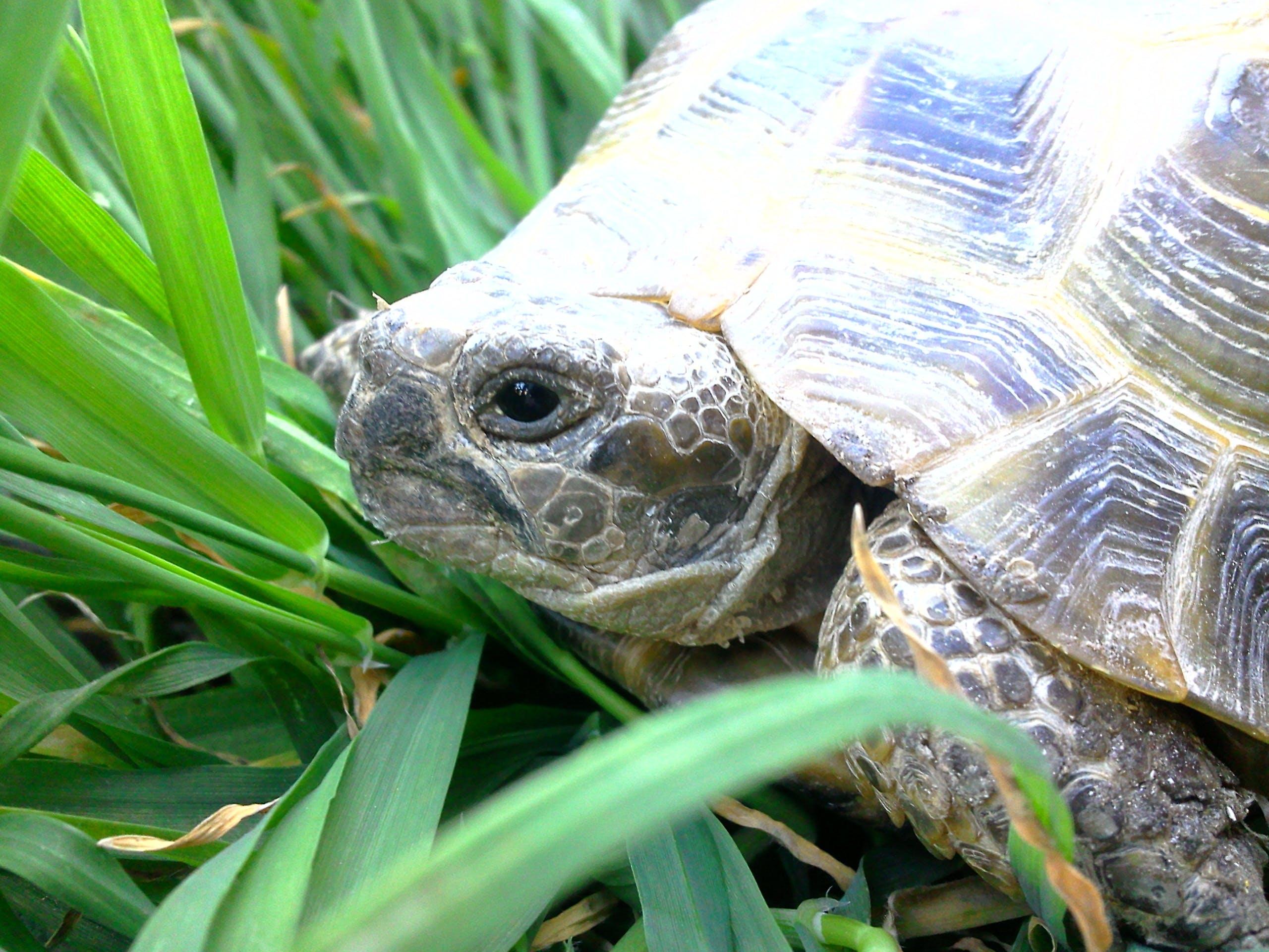 Foto d'estoc gratuïta de tortuga
