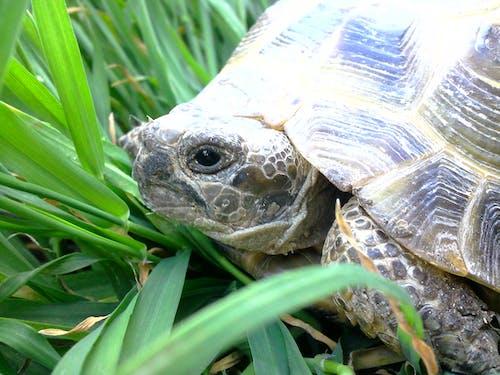 거북이의 무료 스톡 사진