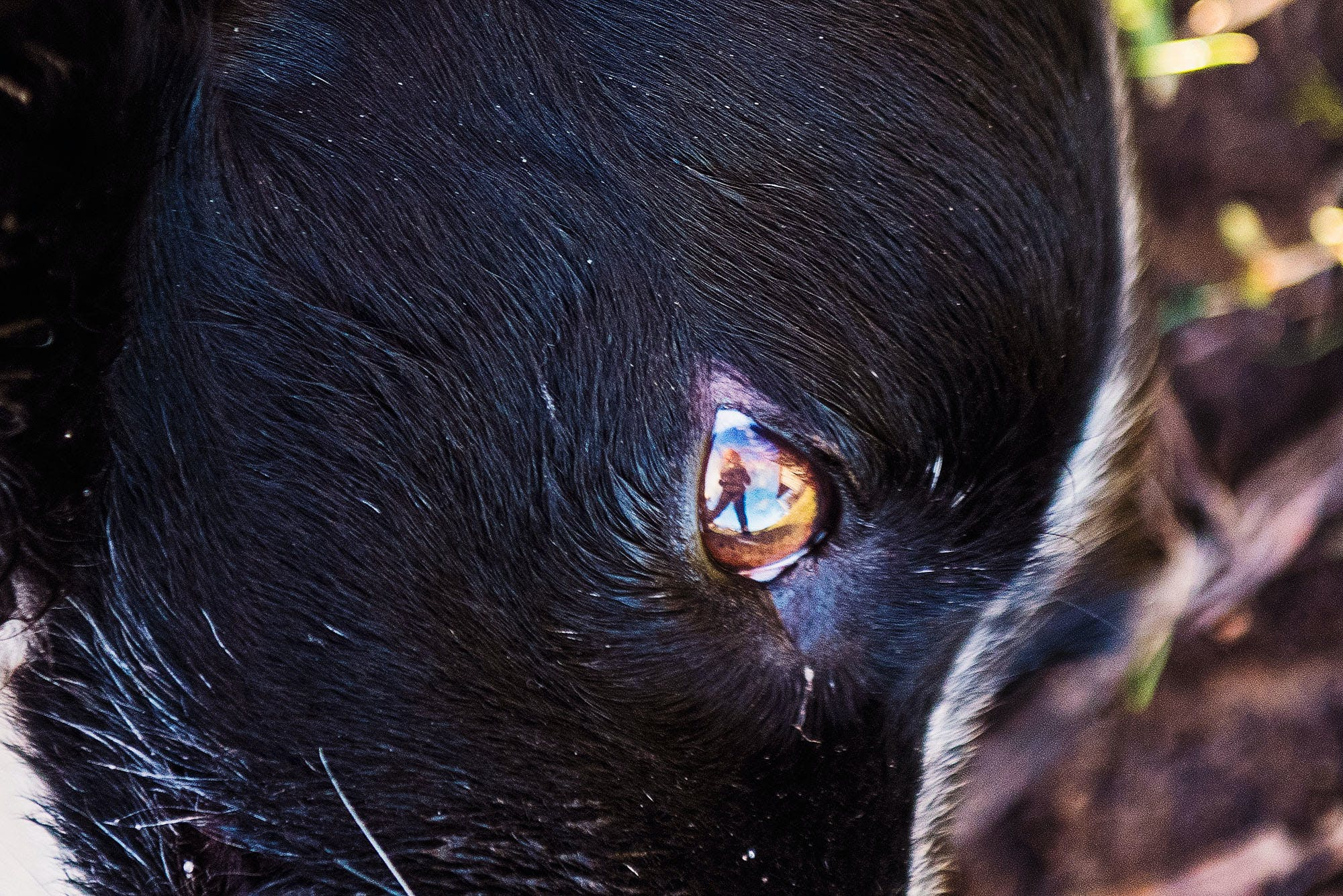 of border collie, country, dog, eye