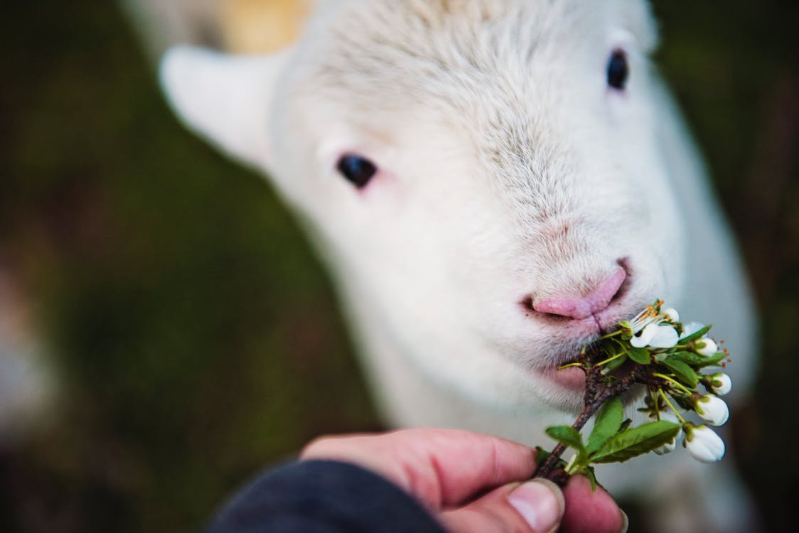 Photo of Person Holding Flower Eating White Animal
