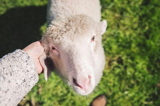 Free stock photo of hand, pet, rural, country