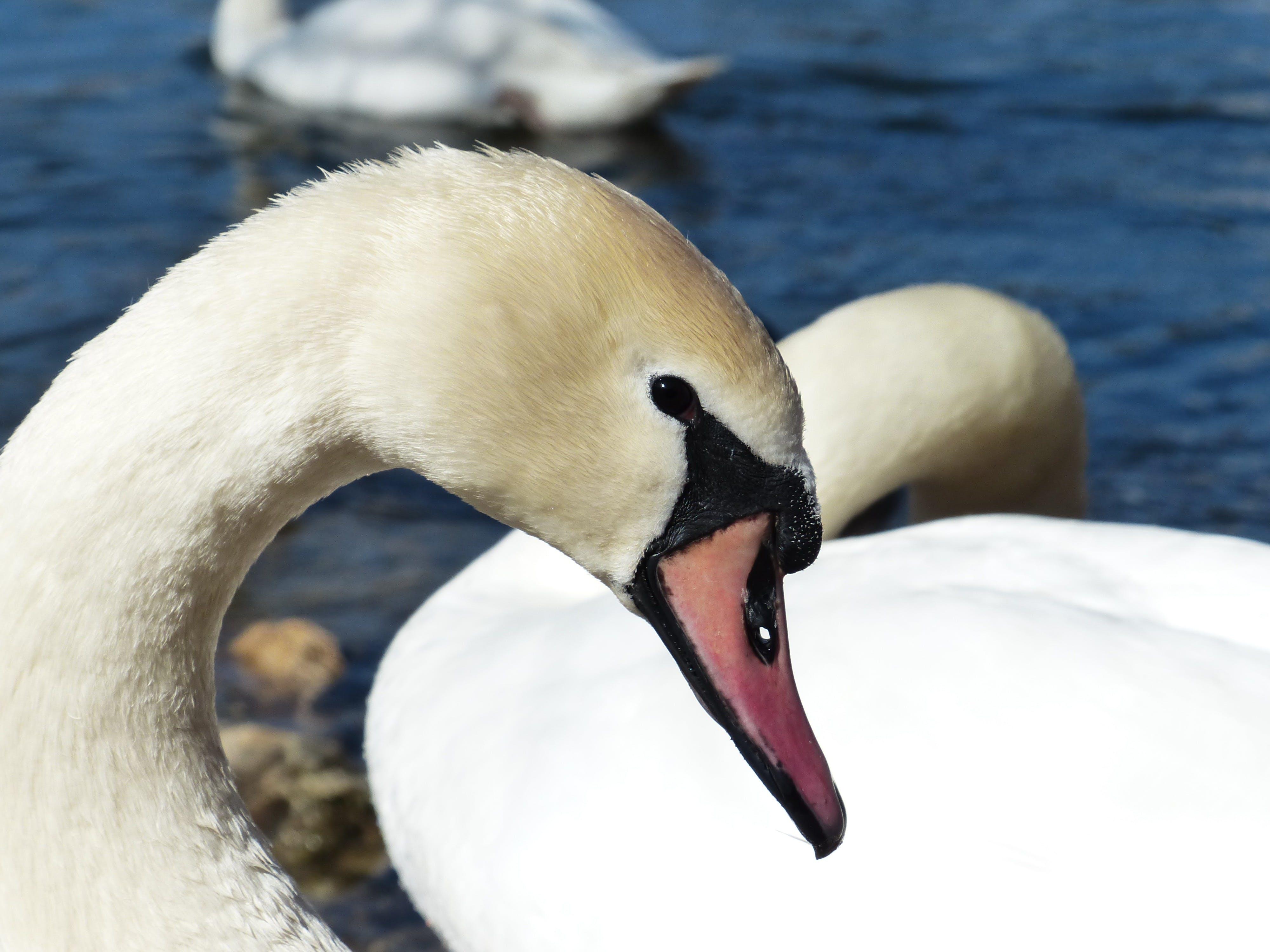 Gratis lagerfoto af close-up, dyr, dyrefotografering, hvid