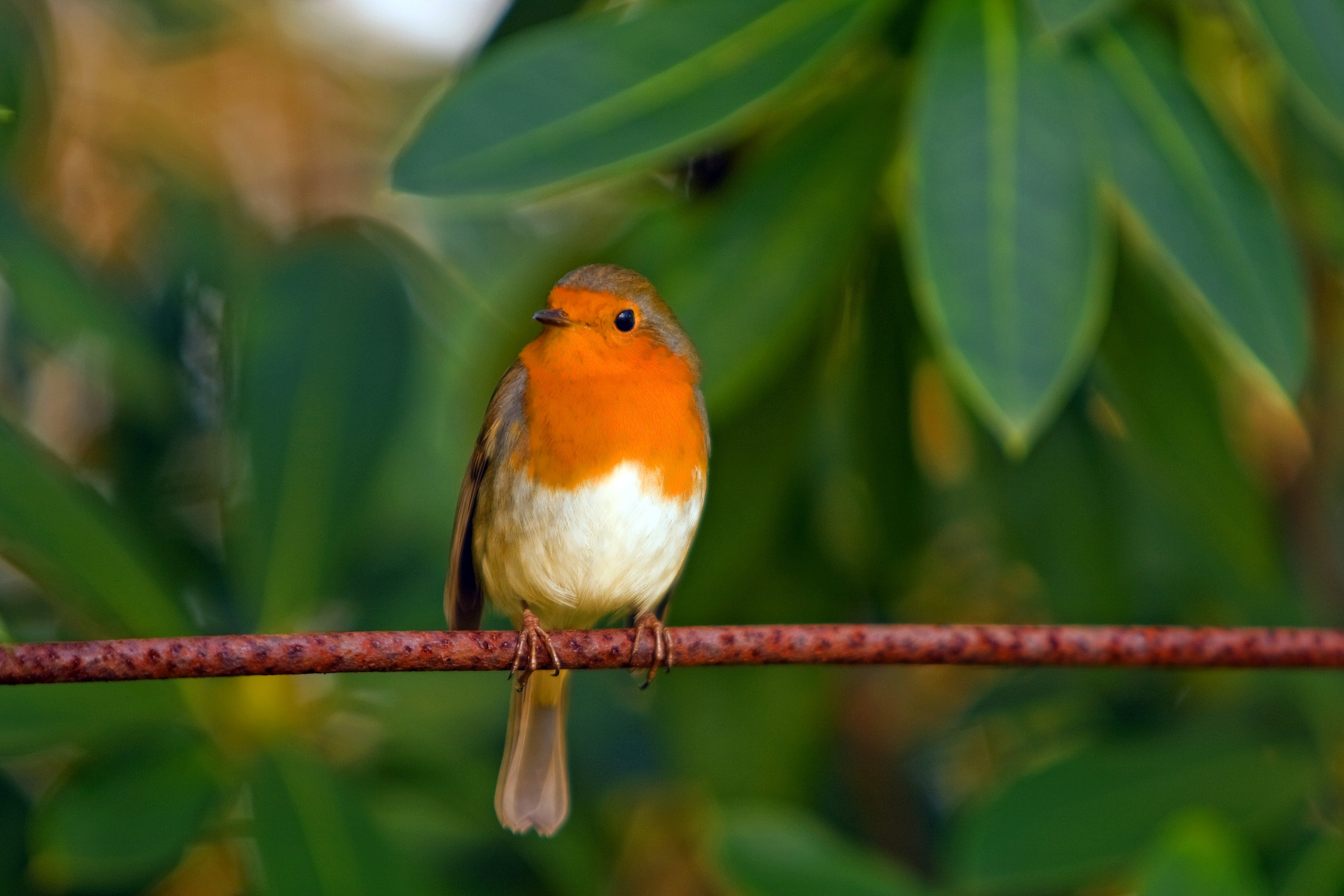 Orange White Brown Bird on Top of Red Branch