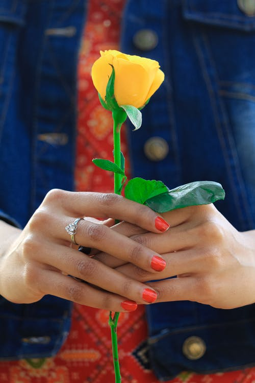 Person Holding A Stem of Yellow Rose Flower
