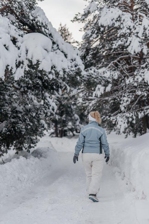 Foto profissional grátis de estrada, floresta montanhosa, inverno