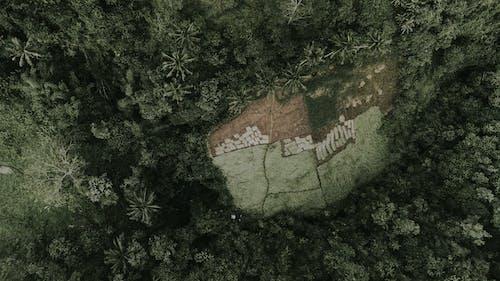 Plantations terrain amidst green tropical forest