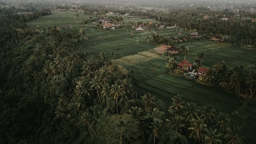 Aerial view of green plantations located near private houses and lush tropical forest