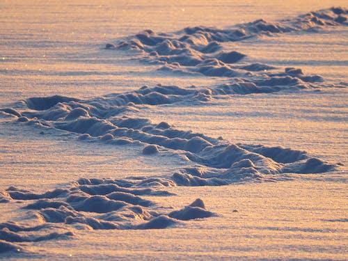 Základová fotografie zdarma na téma příroda, sníh, stezka, zima