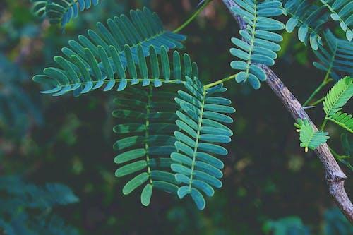 Бесплатное стоковое фото с Биология, ветвь дерева, дерево, дикий