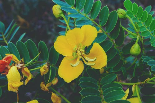 Foto d'estoc gratuïta de arbre, flors, fosc, fotografia de natura