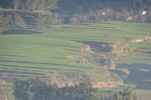 Free stock photo of felds, green crops, landscape