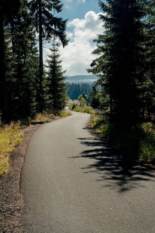 Empty asphalt road going through forest with coniferous trees against blue sky with white cumulus clouds on sunny day in summer