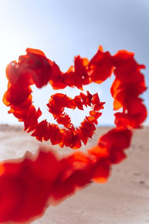 Free stock photo of flowers, heart, love