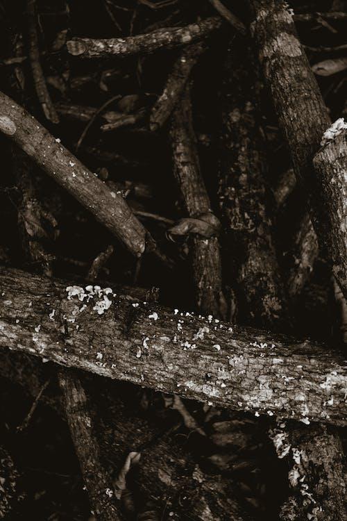 açık hava, afet, ağaç içeren Ücretsiz stok fotoğraf