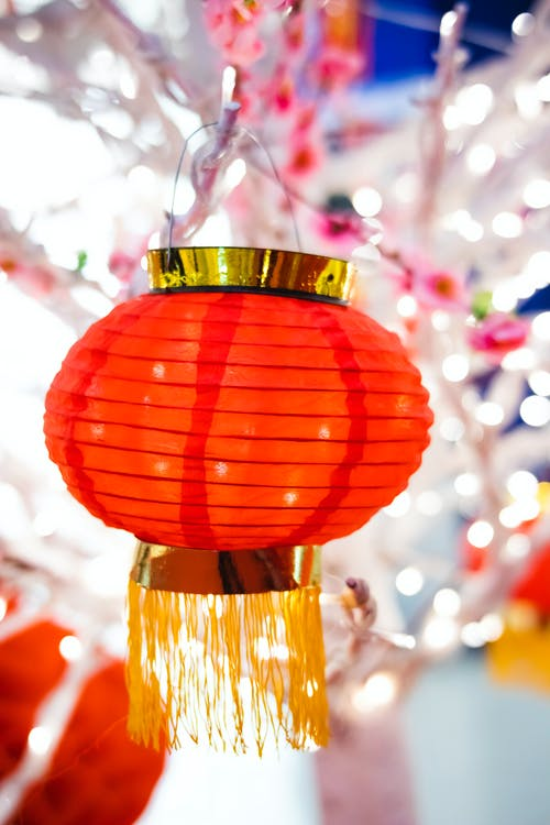 Red traditional oriental lantern hanging on branch