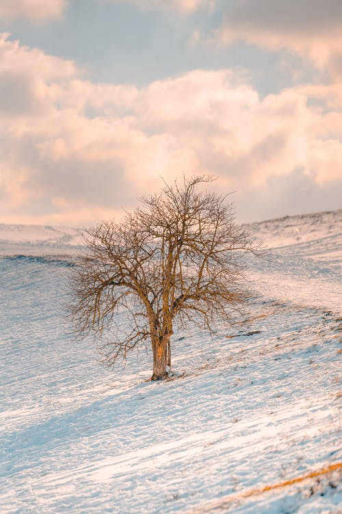 Lonely leafless tree growing on snowy meadow