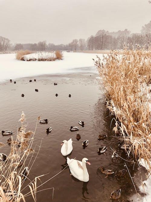不變, 乾的, 冬季 的 免費圖庫相片