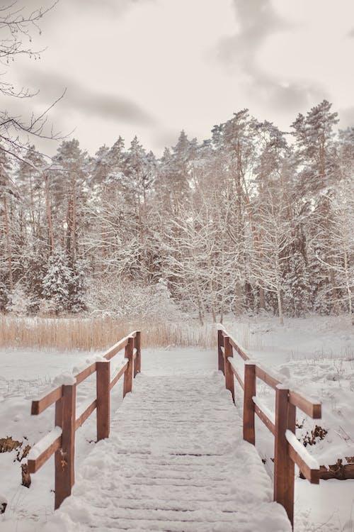 冬季, 冷, 冷靜 的 免費圖庫相片