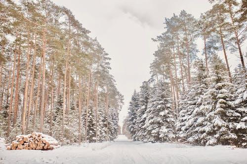 人行道, 冬季, 冷 的 免費圖庫相片