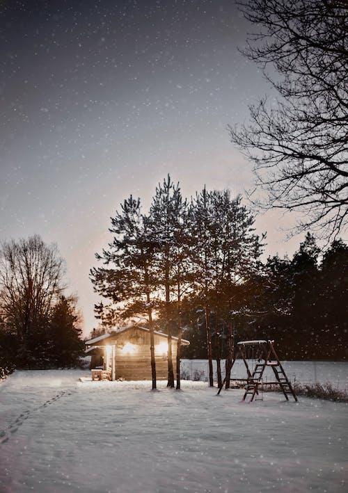 冬季, 冷, 凍結的 的 免費圖庫相片